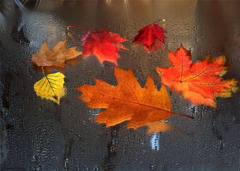 Good Autumn Rain Music Sounds To Me, Foliage Is Turned, The Litter In The  Puddles. How Easy For Me, When The Whole World Is Silent, Him Peace,  Believe Me, Too, ...